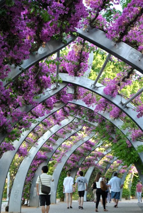 flower covered walk way